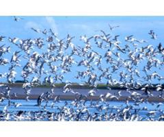 Control natural de aves