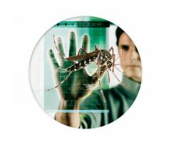 Tratamientos contra el mosquito tigre