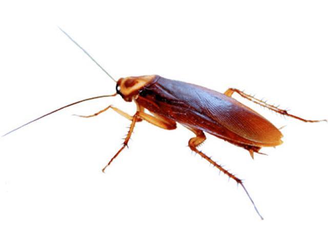 LLoret de Mar |  Eliminar cucarachas | Control de Plagas |